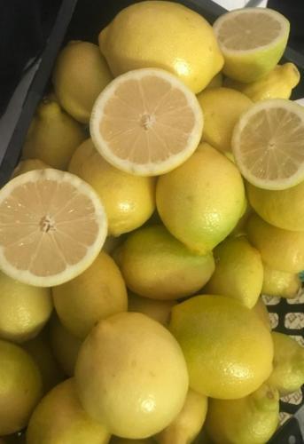 Limón Egipcio