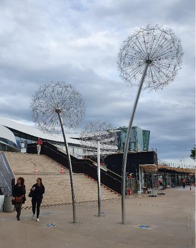 Dandelions (Pusteblume) - Nizza, Frankreich