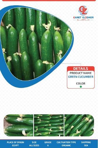 Egyptian cucumber