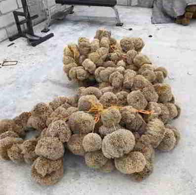 Mixed wool