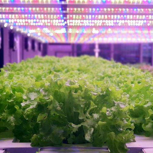 Indoor Farming Projects