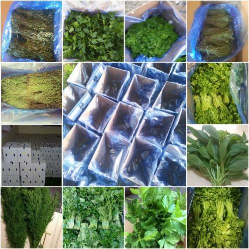 Vegetales de hoja
