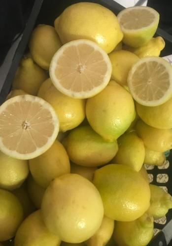 Citron égyptien