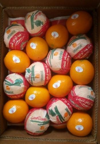 Arancia fresca egiziana dell'ombelico