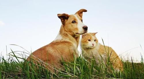 Fermenti Lattici Probiotici per Cani e Gatti