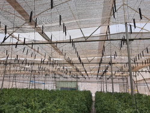 reflective shade net