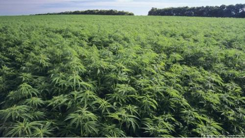 cbd products and raw materials