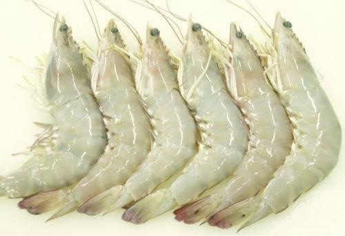 white prawns