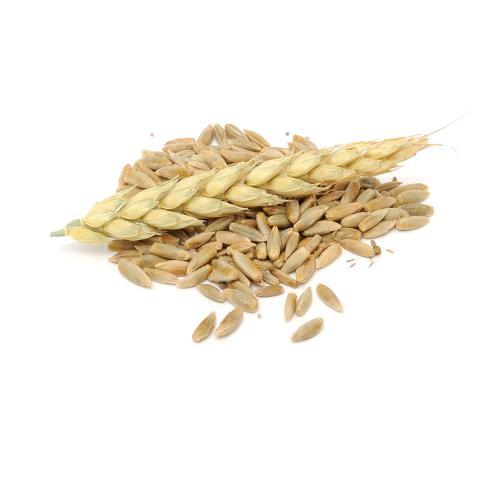 Rye grain (organic)