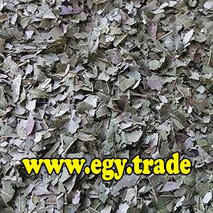 GUAVA dry leaves
