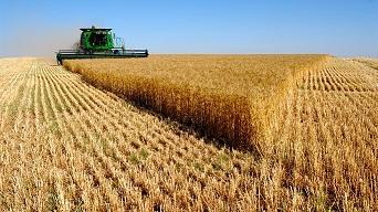 Пшеницу всех сортов Рожь Овёс Ячмень Семена подсолнечника Се
