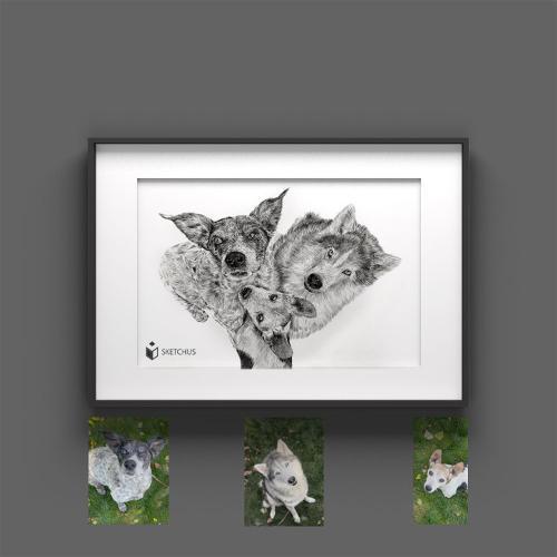 Tier zeichnen lassen Tierportraits Bleistift Sketchus