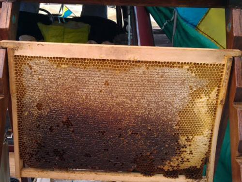 Мед натуральный высокого качества
