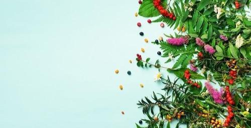 Orangenextrakt 35 % Bioflavonoids