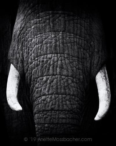 Wildlife Photographic Prints