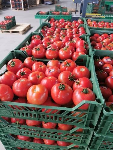 Pomodori inglesi