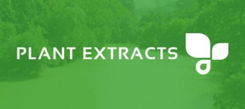 Ginseng Extrakt