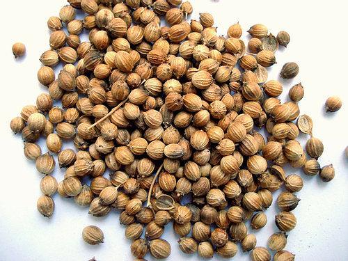 Coriandre Grain