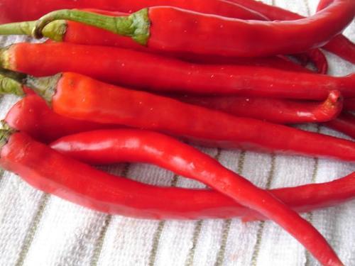chili pepers en vinaigre