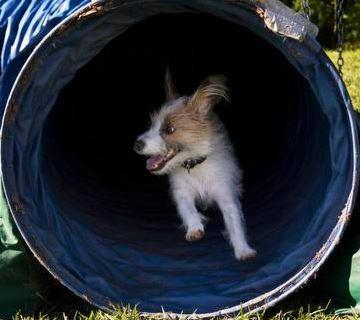 Hondenschool inrichting