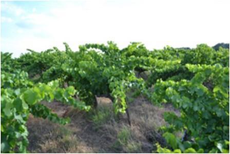 argiles blanches kaolin et argiles vertes à usage agricole
