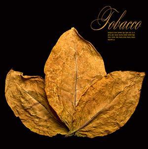Tobacco Leaf and Cut Rag