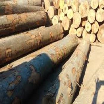 Wooden Stakes, Poles And Posts