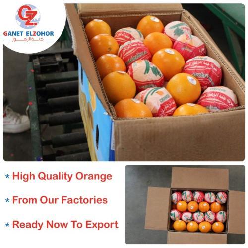 Oranges égyptiennes