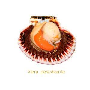 Vieira pescAvante marisco Gallego comprar