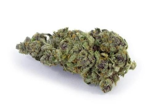 Purple Breath CBD Bud