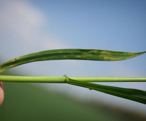 Fungicidi - acaricidi