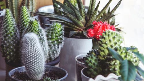 Plante artifcielle tergal sans entretien