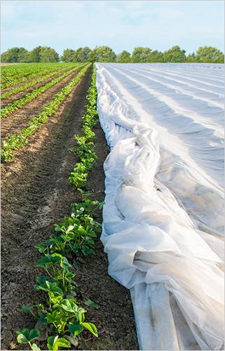 Spunbond agriculture pour couverture thermique