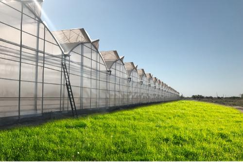 Turnkey Greenhouse Projects
