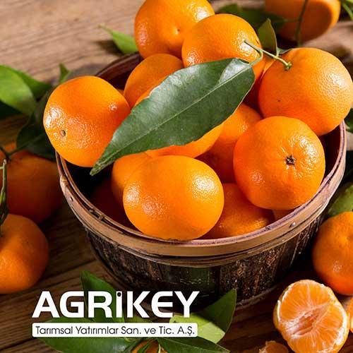 Yaş Meyve Üretimi ve İhracatı