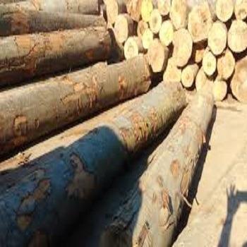 Beech , Birch ,Ash , Spruce Logs