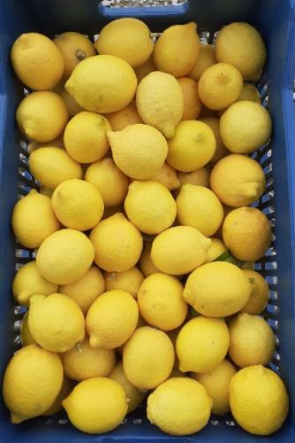 Λεμόνια ολόφρεσκα εξαιρετικής ποιότητας Κορινθίας