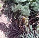 ANTI-BIRD CROP PROTECTION