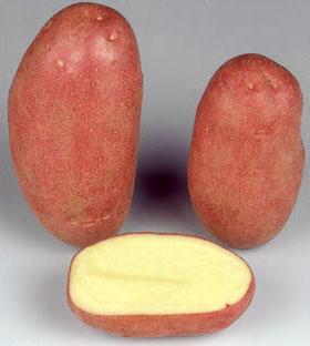 Potatoes - Red skin