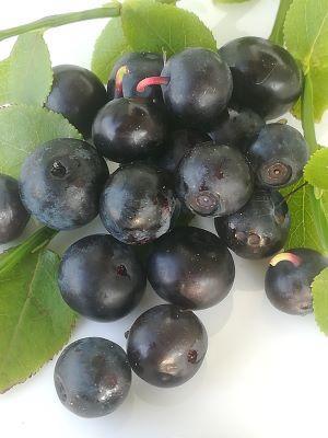 Juice concentrate arctic bilberry (vaccinium myrtillus)
