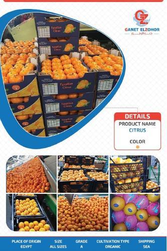 Mandarina egipcia