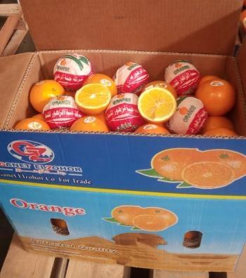 Egyptian Navel orange
