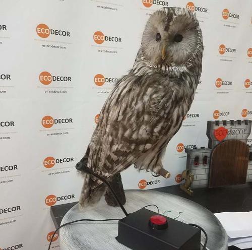 Owl intercom (one way communication)