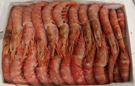 RED ARGENTINIAN SHRIMPS
