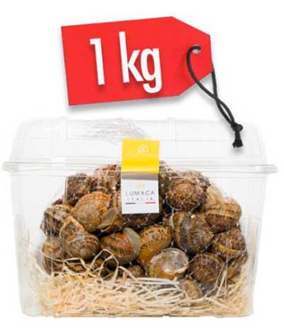 LUMACHE HELIX ASPERSA MULLER 1kg