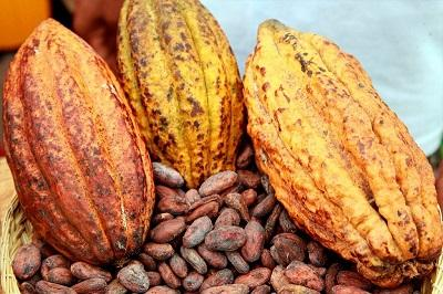COCOA BEANS AND PASTE