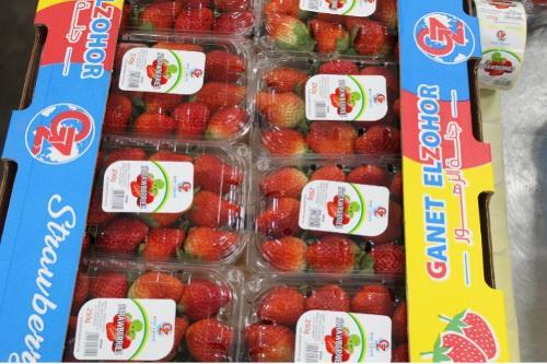 Fresas egipcias frescas
