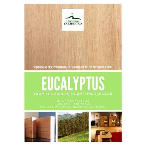 Eucalyptus Holz für Fussböden und Möbel