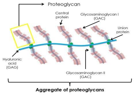 Lipo-Proteoglicani