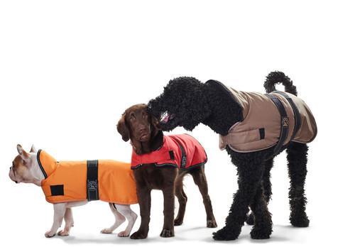 Vetements pour chiens Hunter